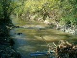 McAlpine Creek