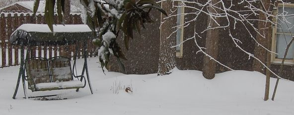 Charlotte Snow - 02.12.2014
