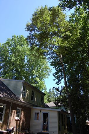Accurate & Economical Tree Experts